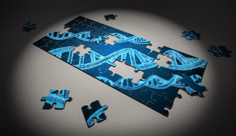 Researchers are piecing together the DNA repair puzzle.