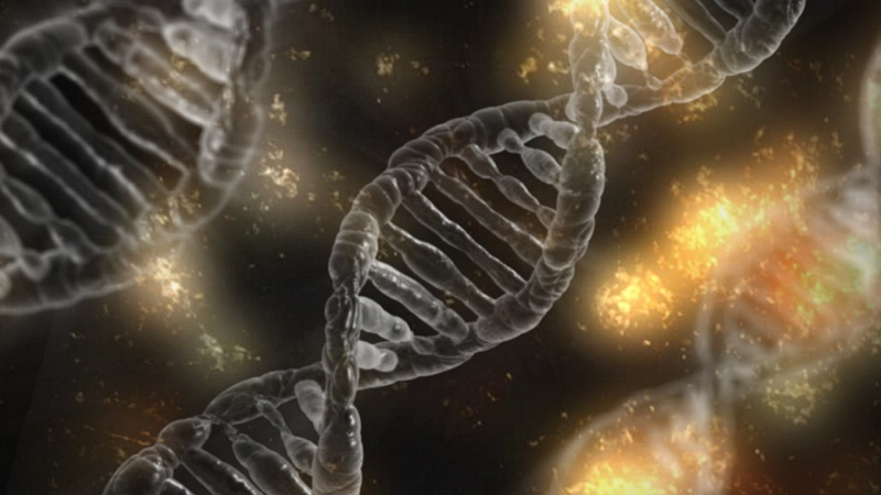 DNA damage is best fixed by DNA Repair.
