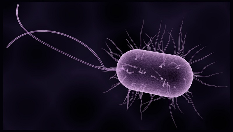 Bacteriobots have built-in flagella for propulsion.