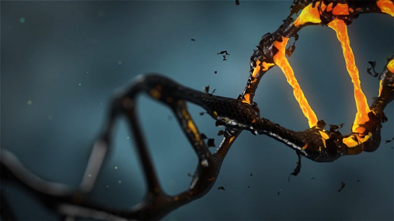 DNA Damage Theory of Aging. Aging is due to faulty DNA Repair.