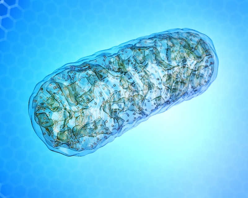 mitochondrial free radical theory of aging has been replaced.