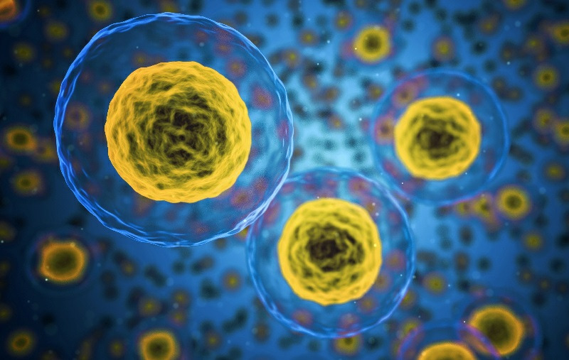 Can we reverse stem cell decline?