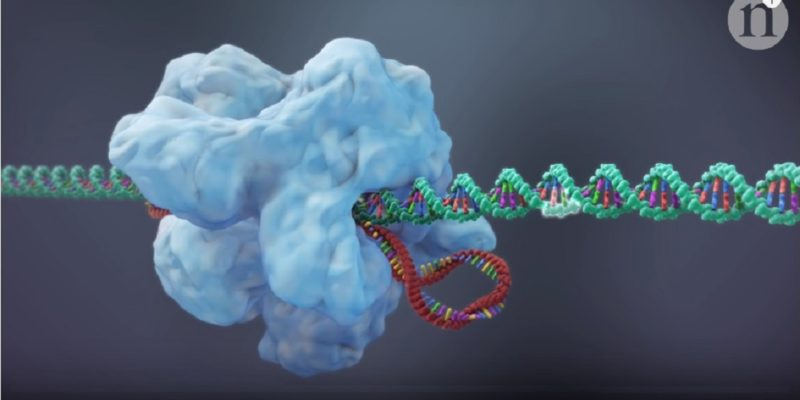 CRISPR-Cas9 screenshot
