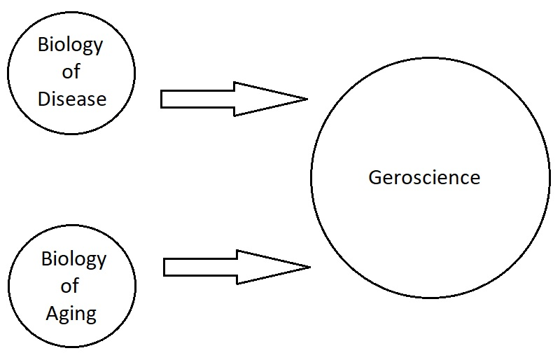 Geroscience is at the intersection between the biology of age-related chronic diseases and the basic biology of aging.