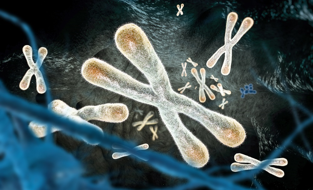 Telomere length telomerase and telomeres review.