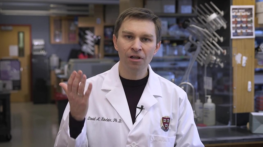 Dr. David Sinclair discusses how NMN boosts NAD reverses aging in blood vessels
