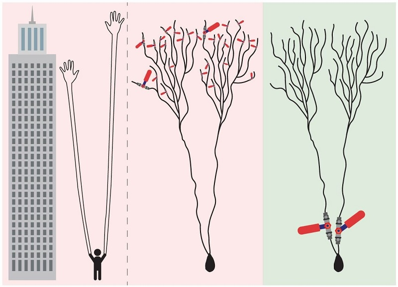 Dendrites ascend in importance at the expense of synapses in the newmodel of how the brain learns.
